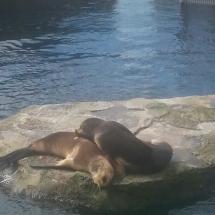 zoo-am-meer-03