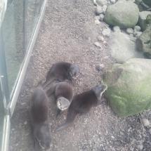 zoo-am-meer-04