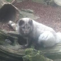 zoo-am-meer-05