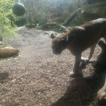 zoo-am-meer-10