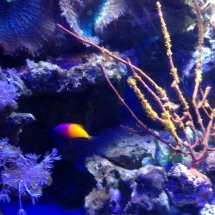 sealife-hannover-04