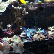 sealife-hannover-06