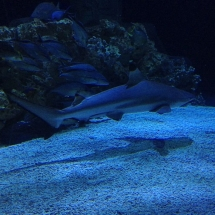 sealife-hannover-09
