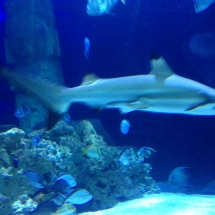 sealife-hannover-11