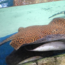 sealife-hannover-18
