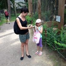 sommerferien-wildpark-16