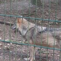 besuch-wolfscenter-herbstferien16-003