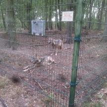 besuch-wolfscenter-herbstferien16-004