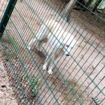 besuch-wolfscenter-herbstferien16-022