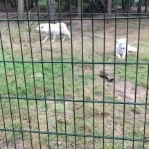 besuch-wolfscenter-herbstferien16-025